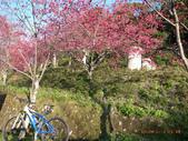 花好月圓篇--武嶺濺雪單車行--20120204:RIMG0439.JPG