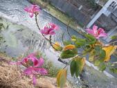 台南竹溪--揚.堤.呷..春:RIMG1577.JPG