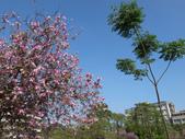 台南竹溪--揚.堤.呷..春:RIMG1702.JPG