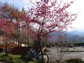 花好月圓篇--武嶺濺雪單車行--20120204:RIMG0235.JPG