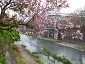 台南竹溪--揚.堤.呷..春:RIMG1528--cp25.JPG