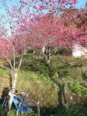 花好月圓篇--武嶺濺雪單車行--20120204:RIMG0444.JPG