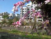 台南竹溪--揚.堤.呷..春:RIMG1653.JPG