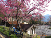 花好月圓篇--武嶺濺雪單車行--20120204:RIMG0229.JPG