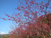 花好月圓篇--武嶺濺雪單車行--20120204:RIMG0441.JPG