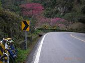 花好月圓篇--武嶺濺雪單車行--20120204:RIMG0194.JPG