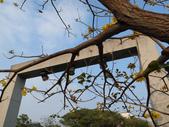 台南竹溪--揚.堤.呷..春:RIMG1556.JPG