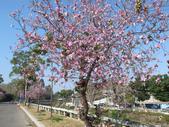 台南竹溪--揚.堤.呷..春:RIMG1701.JPG