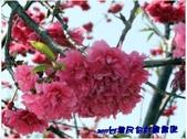 【旅遊】彰化台灣名俗村:normal_96c705ba480c22bd570789bcdbc0623f.jpg