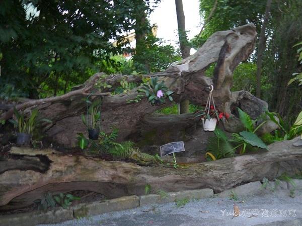 準園生態莊園:P1100735.JPG