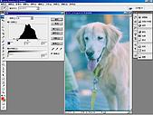 負片翻拍和後製處理:Dog-09.jpg