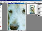 負片翻拍和後製處理:Dog-10.jpg