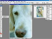 負片翻拍和後製處理:Dog-11.jpg
