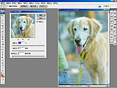 負片翻拍和後製處理:Dog-12.jpg