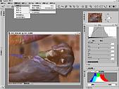 負片翻拍和後製處理:Dog-01.jpg