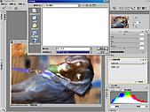 負片翻拍和後製處理:Dog-02.jpg
