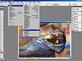負片翻拍和後製處理:Dog-03.jpg