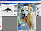 負片翻拍和後製處理:Dog-04.jpg