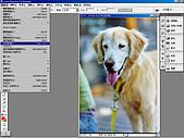 負片翻拍和後製處理:Dog-05.jpg