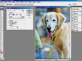 負片翻拍和後製處理:Dog-06.jpg