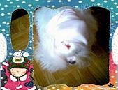 布丁1(2007~2009):粉紅帽布丁7