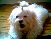 布丁2(2007~2009):可愛布丁11.jpg