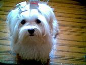 布丁2(2007~2009):布丁新照型5.jpg