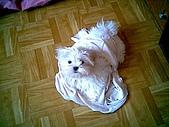 布丁1(2007~2009):布丁大戰內衣6