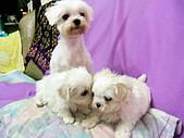 布丁1(2007~2009):布丁的母親跟兄弟
