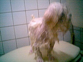 布丁1(2007~2009):布丁第3次洗澡2