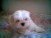 布丁1(2007~2009):布丁第1次洗澡6