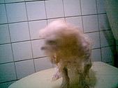 布丁1(2007~2009):布丁第3次洗澡3