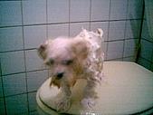 布丁1(2007~2009):布丁第3次洗澡5