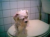 布丁1(2007~2009):布丁第3次洗澡6