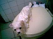 布丁1(2007~2009):布丁第3次洗澡7