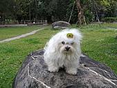 布丁1(2007~2009):布丁母親節4.JPG