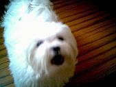 布丁1(2007~2009):可愛布丁1