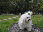 布丁1(2007~2009):布丁母親節5.JPG