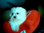 布丁1(2007~2009):布丁第3次洗澡19