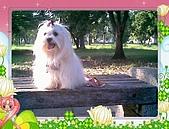 布丁1(2007~2009):布丁生日1.jpg