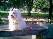布丁1(2007~2009):布丁生日2.jpg
