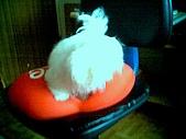 布丁1(2007~2009):布丁第3次洗澡26