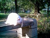 布丁1(2007~2009):布丁生日5.jpg
