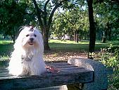 布丁1(2007~2009):布丁生日7.jpg