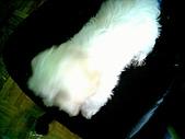 布丁1(2007~2009):布丁第3次洗澡32