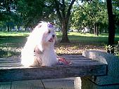 布丁1(2007~2009):布丁生日9.jpg
