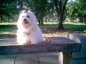 布丁1(2007~2009):布丁生日10.jpg