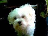 布丁1(2007~2009):布丁第3次洗澡34