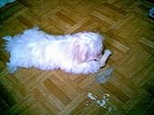 布丁1(2007~2009):布丁第3次洗澡39