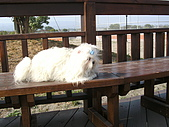布丁1(2007~2009):照片 155.jpg